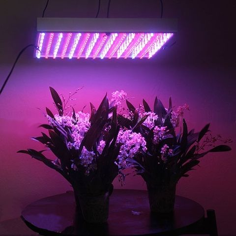 1000 watt LED grow light in indoor garden